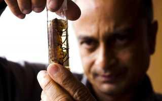 В чем опасность болезни Шагаса, осложнения и методы лечения