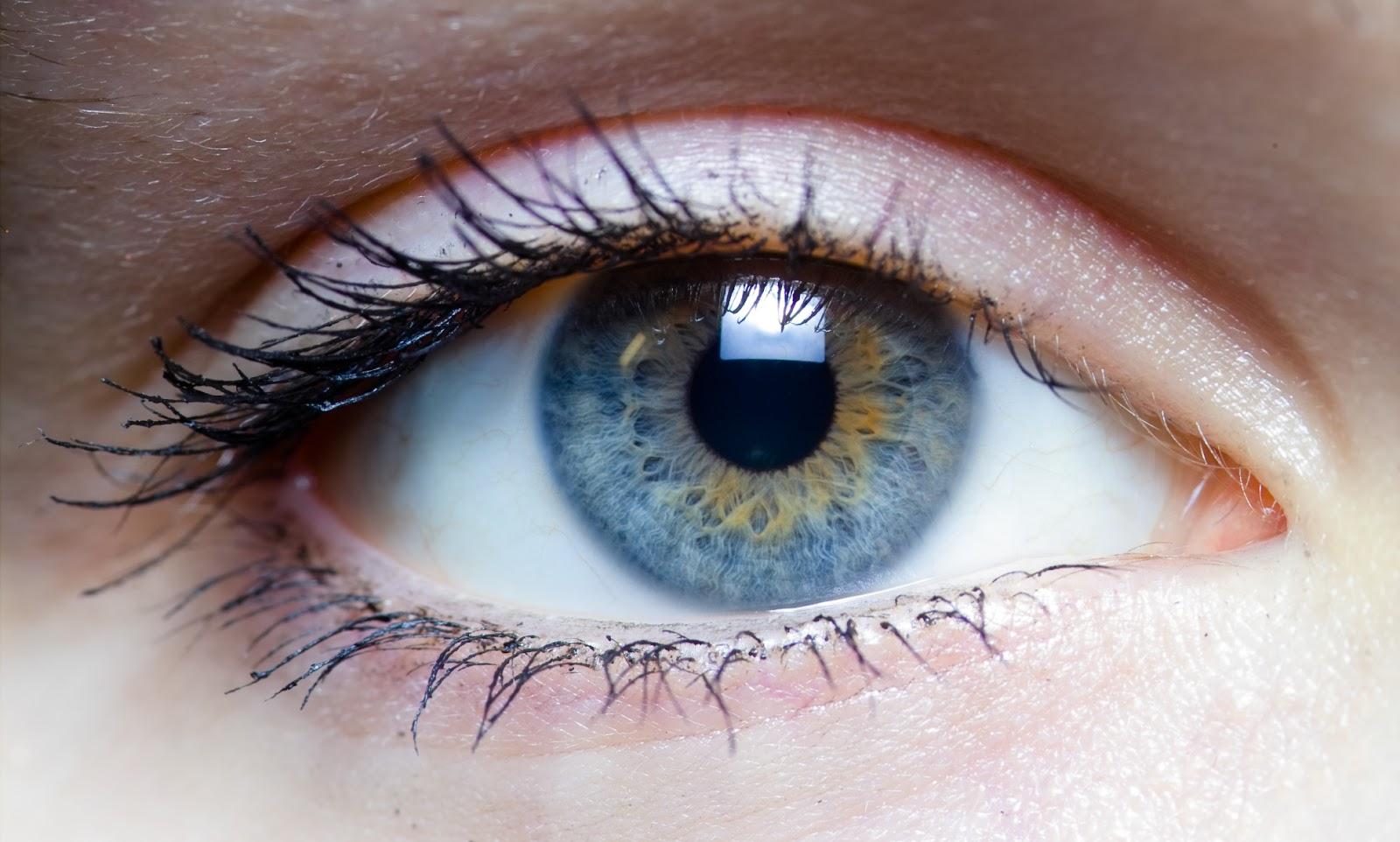 Орган зрения человека