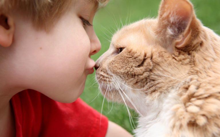 Глисты у детей и домашние животные