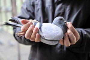 Контакт с больной птицей