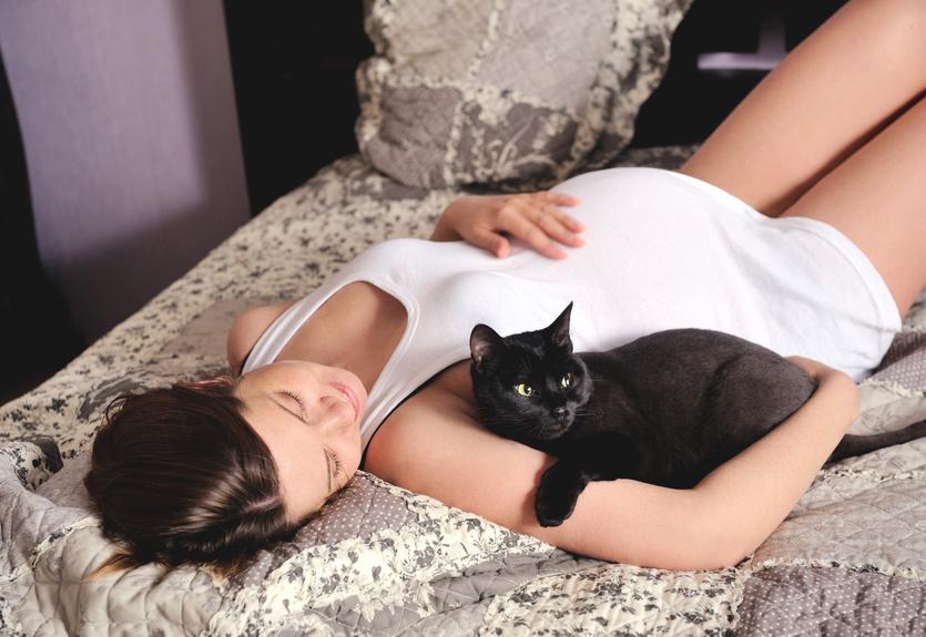 Общение с кошкой