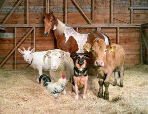 Ивермектин в ветеринарной практике