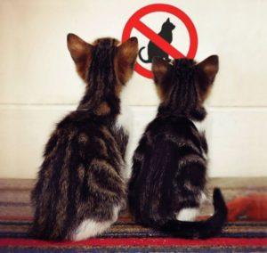 Ограничение контакта с животными