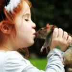 Избегать контактов с дикими животными и грызунами