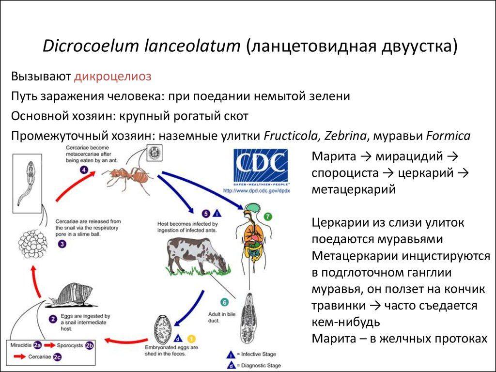 Способы передачи инфекции