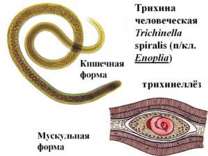 Разновидности паразита