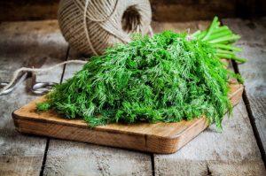 Укроп – ароматная зелень для здоровья