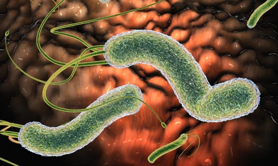 Факультативные паразиты