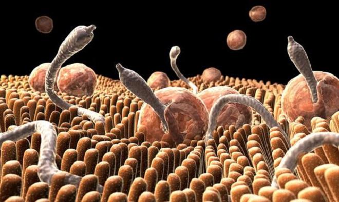 Препарат для профилактики кишечных паразитов thumbnail