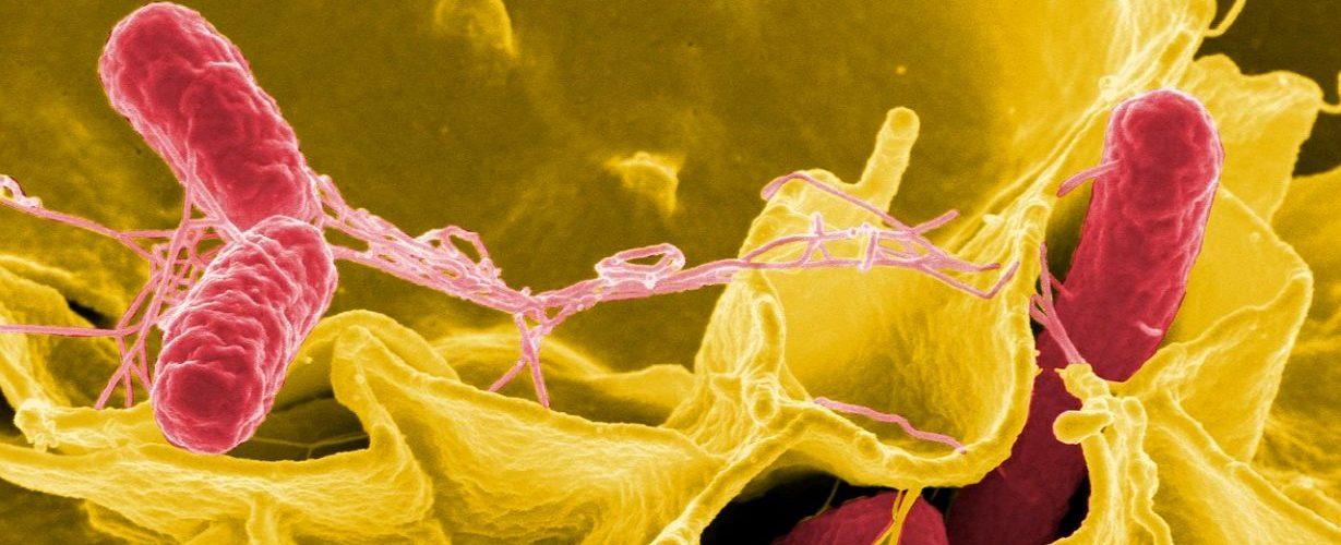 Бактерии и черви в органах человека